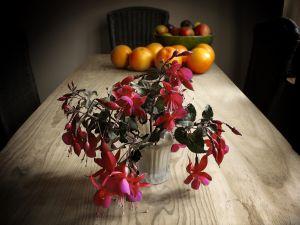 1230862_fuchsia_and_fruit